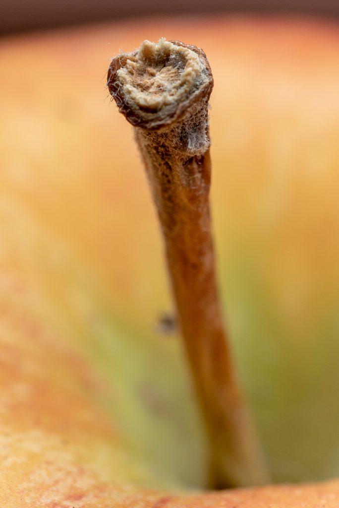Makro, Kleines ganz groß: Apfelstiel