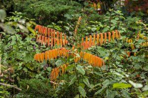 Herbst im botanischen Garten Großpösna im Oberholz