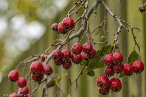 Herbst im botanischen Garten Großpösna